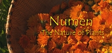 Numen Documentary
