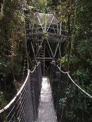 Cloud Forest Walkway
