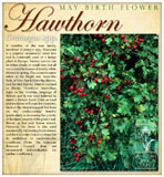 ecard Hawthorn birth