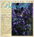 Bluebells Thank You