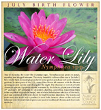 Water lily birth July