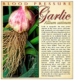 Garlic Blood PressureSM