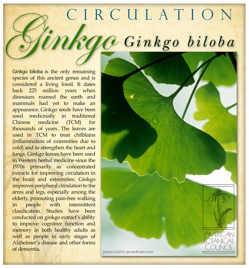 Ginkgo Circulation