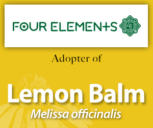 Lemon balm Adopter