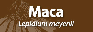 Maca name for AAH