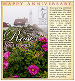 Rose Happy AnniversarySM