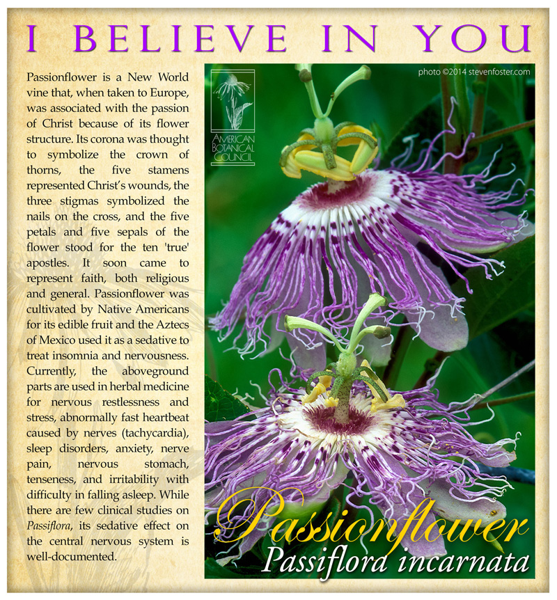 Passionflower I Believe
