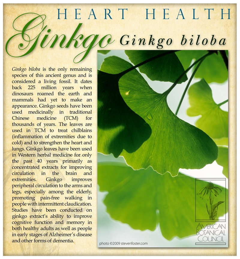 Ginkgo revised