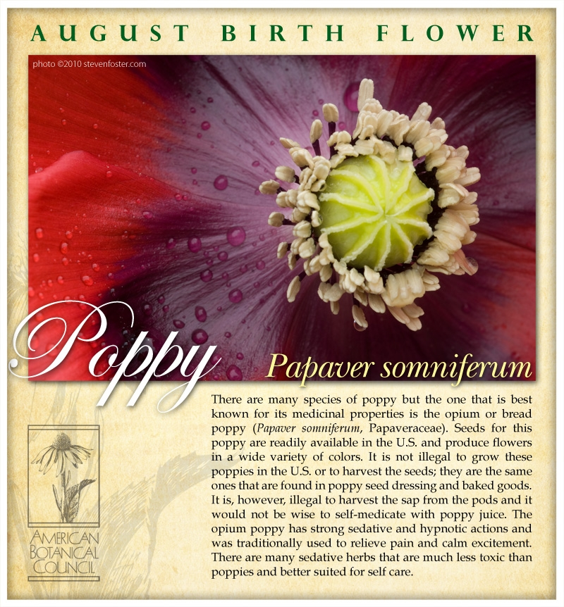 Poppy birth August