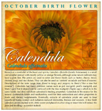 Calendula - October Birthday