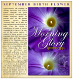 Ipomoea - September Birthday