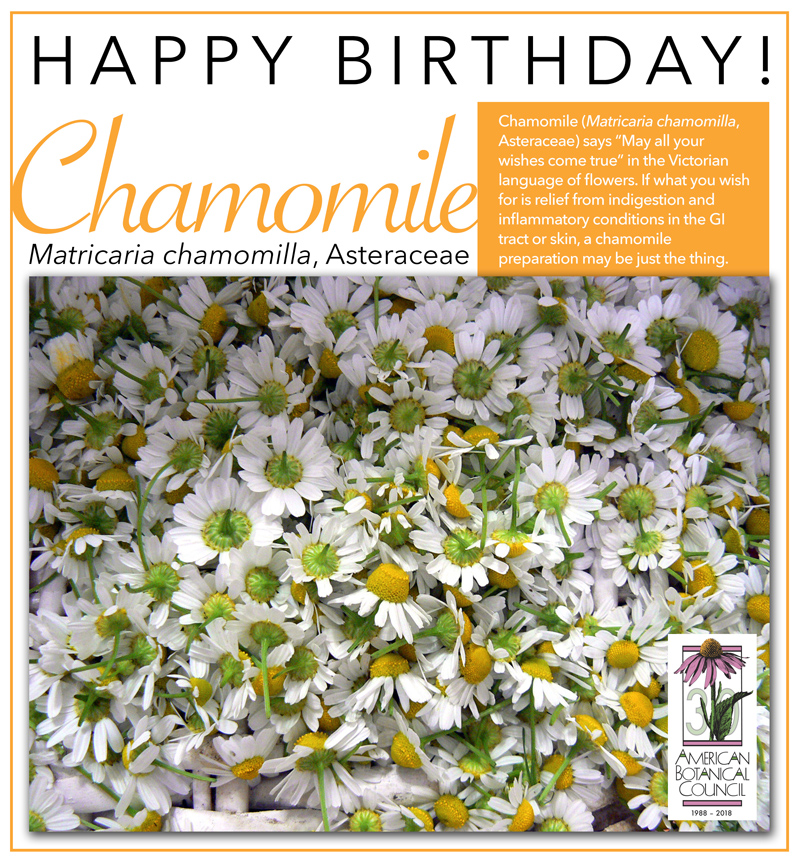 Birth Chamomile 2019