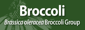 Broccoli AAH SM