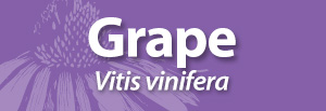 Grape for AAH.jpg