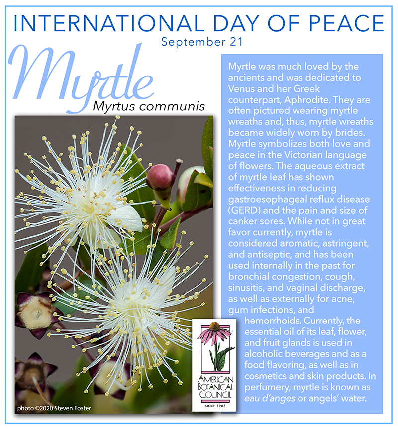 Intl Day Peace Myrtle