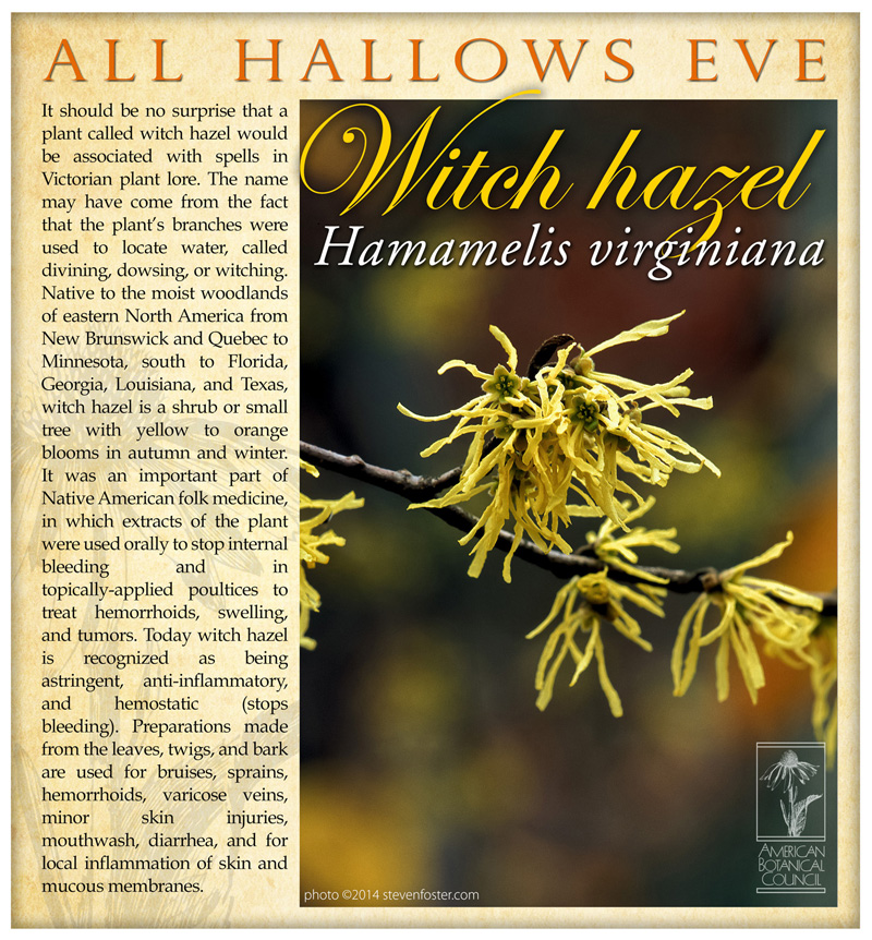 Witch Hazel All Hallows