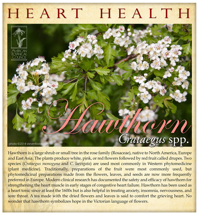Hawthorn Heart Health