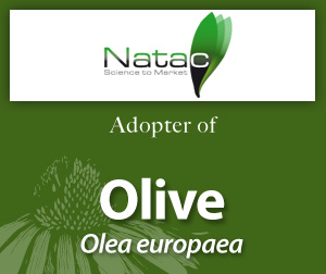 AAH Olive adopter