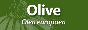 AAH Olive banner